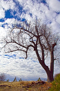 Molly Heng Metal Prints - Beautiful Tree Metal Print by Molly Heng