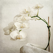 Hannes Cmarits Metal Prints - Beautiful white orchid II Metal Print by Hannes Cmarits