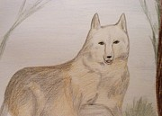 Wolves Pastels Framed Prints - Beautiful Wolfdog Framed Print by Christine Corretti
