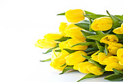 International Floral Delivery Prints - Beautiful Yellow Tulips Print by Boon Mee
