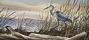 Great Blue Heron Paintings - Beauty Along the Shore by James Williamson