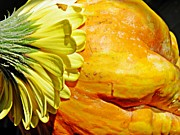 Interior Still Life Metal Prints - Beauty and the Squash 3 Metal Print by Sarah Loft