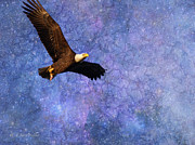 Masked Digital Art Prints - Beauty In Flight - Bald Eagle Print by J Larry Walker