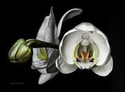 Michelle Wiarda - Beauty in Symmetry