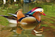 Wood Duck Prints - Beauty in the Pond Print by Ayse T Werner