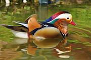 Beauty In The Pond Print by Ayse Deniz