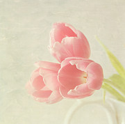 Pink Tulip Flower Prints - Beauty in Three Print by Kim Hojnacki
