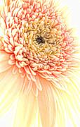 Beauty Print by Sven Pfeiffer