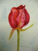 Rosebud Paintings - Beauty by Marita McVeigh