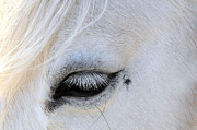 Beauty Mark Print by Suzanne Rogers