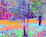 Ann Johndro-collins Framed Prints - Beauty of an Aspen Grove Framed Print by Ann Johndro-Collins