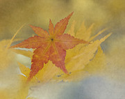 Yellow Leaves Prints - Beauty of Difference Print by Angie Vogel
