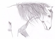 Wild Horses Drawings - Beauty of the Mustang by Mary Johnson