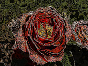 Backdrop Mixed Media Prints - Beauty of the Rose Print by JFantasma Photography