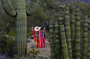 Travel Sightseeing Prints - Beauty Of The Sonoran Desert 1 Print by Bob Christopher