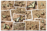 The Colors Of Butterflies Posters - Beauty On The Beach Poster by Debra     Vatalaro