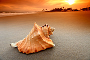 Sea Shell Shop Pyrography Prints - Beauty shell Print by Boon Mee