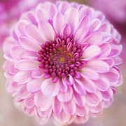 Purple Flower Flower Image Photos - Beauty Within by Carolyn Rauh