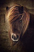 North Sea Posters - Beautyful horse Poster by Angela Doelling AD DESIGN Photo and PhotoArt