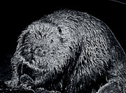 Beaver Digital Art Framed Prints - Beaver 1 Framed Print by Todd Hostetter