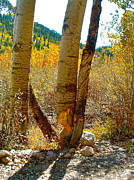 Beaver Digital Art - Beaver Bites on Aspen in Clear Creek Canyon-CO by Ruth Hager