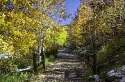 Aspen Trees Prints - Beaver Creek Bike Path Print by Michael J Bauer