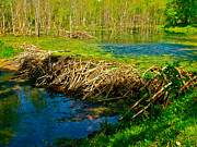 Beaver Digital Art - Beaver Lodge and Dam on Colbert Creek on Rock Spring Trail at Mile 330 on Natchez Trace Parkway-AL by Ruth Hager