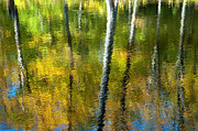 Gatineau Park Posters - Beaver Pond Reflections - 3 Poster by Rob Huntley