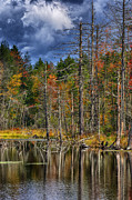 Thomas R Fletcher - Beaver Pond Reflections...