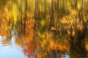 Gatineau Park Posters - Beaver Pond Reflections Poster by Rob Huntley