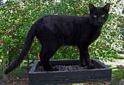Black Cat Photos Photos - Because Its Where The Birds Are by Skip Willits