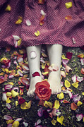 Rose Art - Bedded In Petals by Joana Kruse