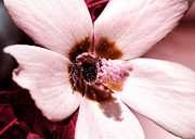 Macro Floral Photos Prints - Bee At Work Print by John Rizzuto
