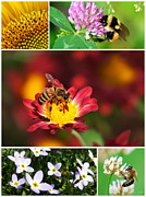 Bee Art Posters - Bee Collage Poster by Christina Rollo