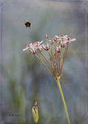 Chalco Hills Recreation Area Prints - Bee Gone Print by Jeff Swanson