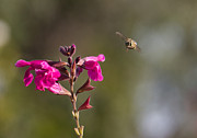 Australian Bee Photos - Bee Happy by Mardi Harrison