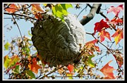 Gail Matthews Metal Prints - Bee Hive High Metal Print by Gail Matthews