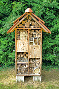 Bamboo House Photos - Bee House by Olivier Le Queinec