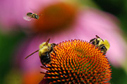 Trio Digital Art Posters - Bee Intruder Poster by Christina Rollo