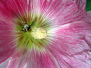 Bee Loving Print by Mike Podhorzer