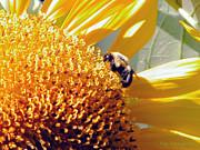 Kay Lovingood - Bee on Sunflower