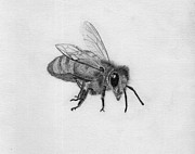Stripe Drawings Originals - Bee Pencil Drawing by Dan Julien