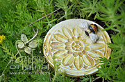 Plate Ceramics Prints - Bee-ware Print by Amanda  Sanford