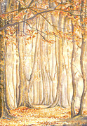 David Evans - Beech Trees Sherwood...