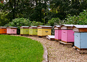 Jatte Photo Prints - Beehives of the Grande Jatte Print by Alex Cassels