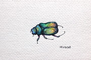 Beetle Drawings Framed Prints - Beetle Framed Print by Hillary Floyd