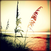 Sea Oats Prints - Before Day II Sunset Print by Chris Andruskiewicz