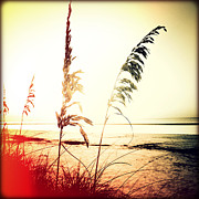 Sea Oats Prints - Before Day Sunset Print by Chris Andruskiewicz
