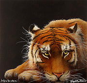 Big Cats Paintings - Before The Storm... by Will Bullas