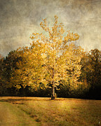 Autumn Landscape Metal Prints - Beginning of Autumn Metal Print by Jai Johnson
